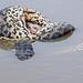 Pantanal_4100