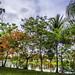 Tropical Yard in Bloom