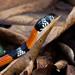 Aesculapian False Coral Snake (Erythrolamprus aesculapii)
