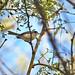 Perlita Tropical