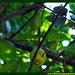 Araçá Pera Psidium acutangulum Myrtaceae Fruta Nativa da Amazônia Floresta Água do Norte Celcoimbra Site Santarém Pará strawberry guava araçazeiro guayaba coronilla arrayan guayabillo DEF Marketing Turismo 8ff